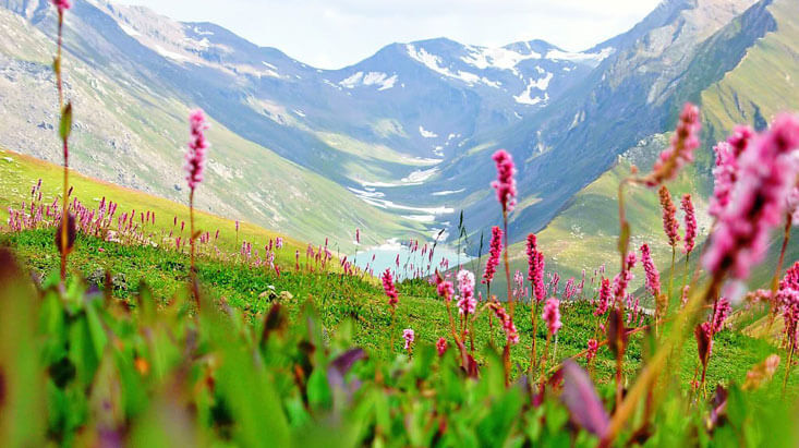 Valley of Flowers-2