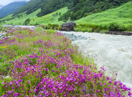 https://www.chardham-tours.com/wp-content/uploads/2019/02/Valley-of-Flower-trek.jpg