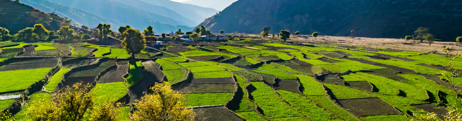 Pantwari-a-Himalayan-village-in-Uttarakhand-Village-Tourism